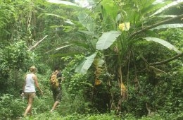 Hiking in the jungle of Pattaya